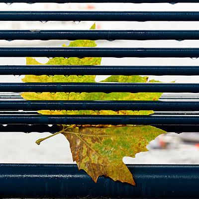 Blatt im Regen - p979m1513298 von Martin Kosa
