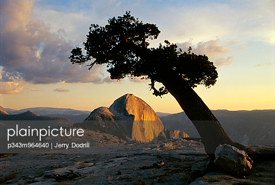 A pine tree at sunset in California. - p343m964640 by Jerry Dodrill