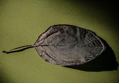 Leaf On green background - p1082m2142835 by Daniel Allan