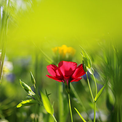 Blumen blühen  - p450m2065257 von Hanka Steidle