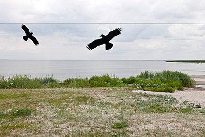 Vogelaufkleber - p2120118 von Edith M. Balk