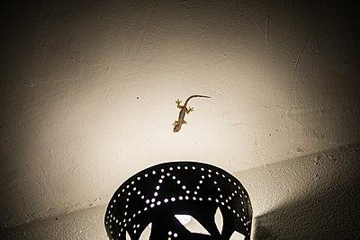 Gecko - p930m1541608 von Ignatio Bravo