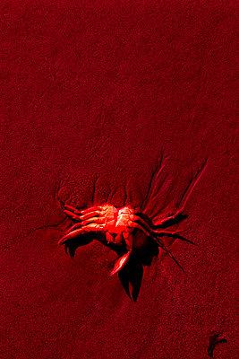 Tote Krabbe im Sand - p2481253 von BY