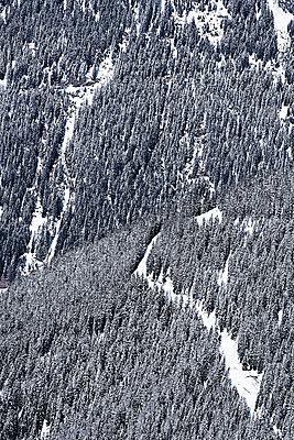 Austria, Tyrol, Ischgl, trees in winter landscape - p300m1068776f by Bela Raba