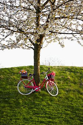 Blossoming tree - p464m1026007 by Elektrons 08