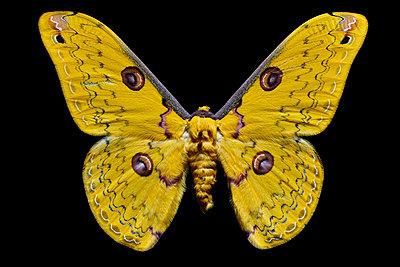 flying yellow - p587m1575100 von Spitta + Hellwig