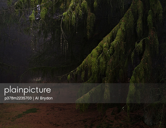 Dark woodland - p378m2235703 by Al Brydon