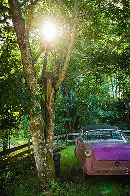 Rostiges Auto in einem Garten - p1418m1572188 von Jan Håkan Dahlström