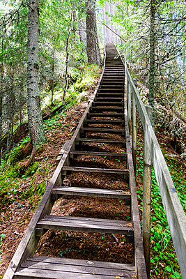 Wooden steps in forest - p312m993051f by Mikael Svensson
