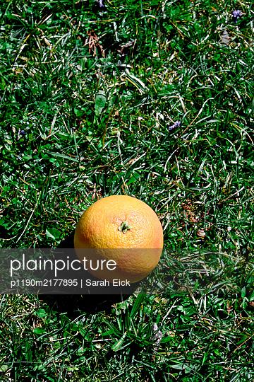 Orange fruit in grass - p1190m2177895 by Sarah Eick