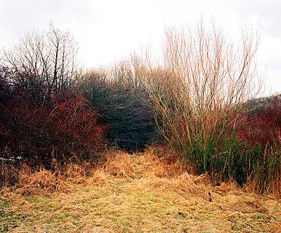 Bushes - p1008m739604 by Valerie Schmidt