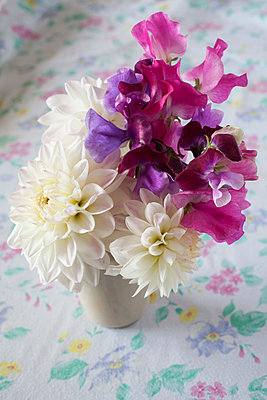 Sweet peas and dahlias in pot - p1470m1540407 by julie davenport