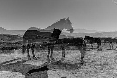 Pferde - p887m1124760 von Christian Kuhn