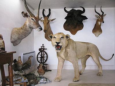 Sammlung ausgestopfter Tiere - p1499m2013712 von Marion Barat