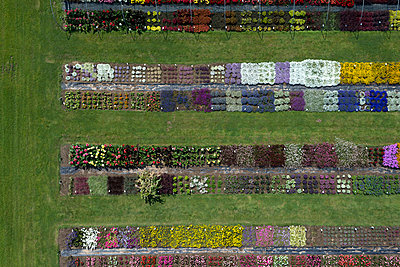 Test area; flowers - p356m851274 by Stephan Zirwes