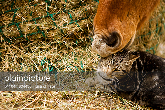 Horse nibbeling at cat\'s ear