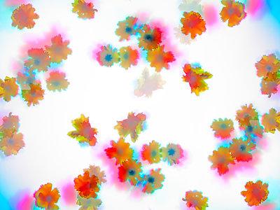 Blüten - p1298m1168813 von mic