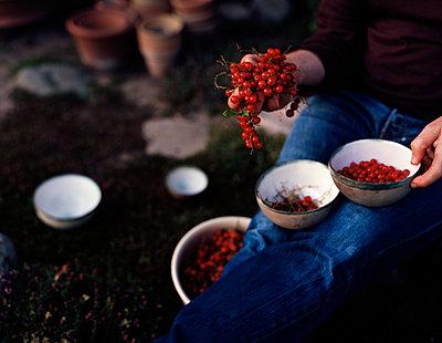Rote Johannisbeeren - p1441m2028204 von Benjamin Zibner