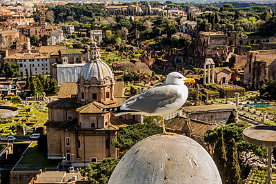 Italy, Rome, Seagull in front of Forum Romanum - p300m926407f by EJW