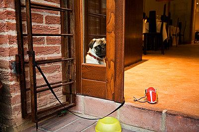 Dog tied to wall in doorway of restaurant - p528m713706 by Kari Kohvakka