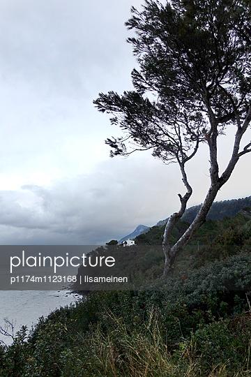 Mallorca zugezogen - p1174m1123168 von lisameinen
