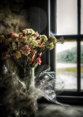 Window Flowers 1 - p1154m1162679 by Tom Hogan