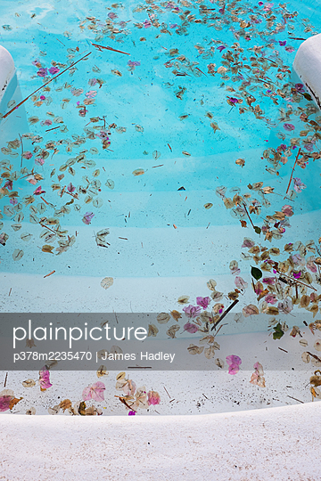 Blossom in swimming pool - p378m2235470 by James Hadley