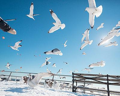 USA, New York City, Möwen fliegen über den verschneiten Strand von Coney Island - p1542m2204114 von Roger Grasas