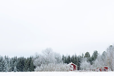 Sweden, Ostergotland, Forest behind house in winter - p352m1126679f by Åke Nyqvist