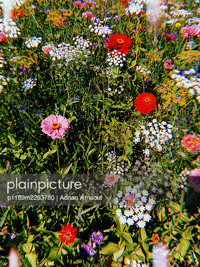 Colourful flowers - p1189m2263780 by Adnan Arnaout