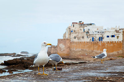 Essaouira - p300m906060f by hsimages
