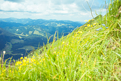 Mountain meadow - p432m917780 by mia takahara