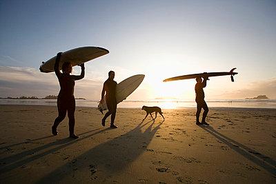 silhouette of three surfers and a dog; chesterman beach tofino vancouver island british columbia canada - p44213300f by Deddeda