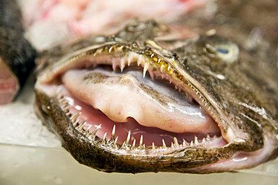 Fischmaul - p6280053 von Franco Cozzo