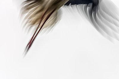 Flying stork - p745m880489 by Reto Puppetti