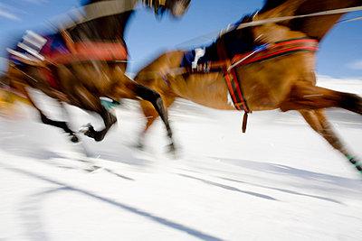 Ski Joring Race - p644m785824 by Vicki Couchman