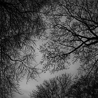 Treetops - p1240m2063335 by Adeline Spengler