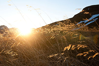 Blades of grass at sunset - p533m1556548 by Böhm Monika