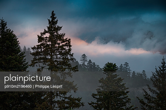 Gewitterwolken über einem Nadelwald, Sonnenuntergang, Frankreich - p910m2196460 von Philippe Lesprit