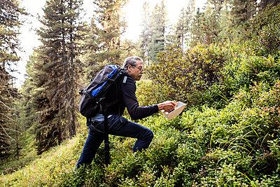 Heidelbeerenernte in den Bergen  - p1222m2126502 von Jérome Gerull