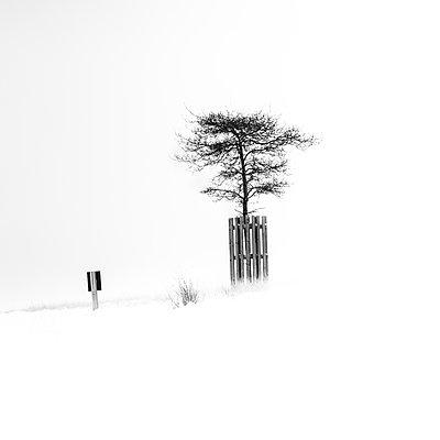 Alone - p1256m2098985 by Sandra Jordan