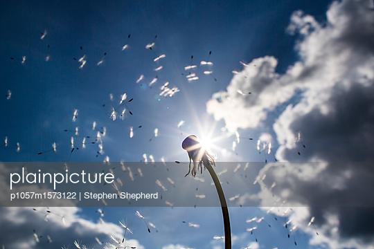 p1057m1573122 von Stephen Shepherd