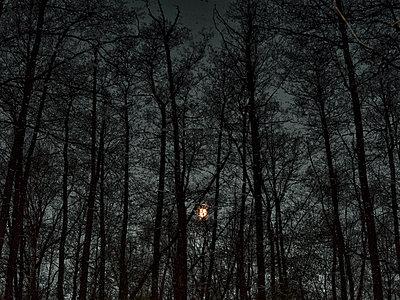 Full moon - p1012m2228898 by Frank Krems