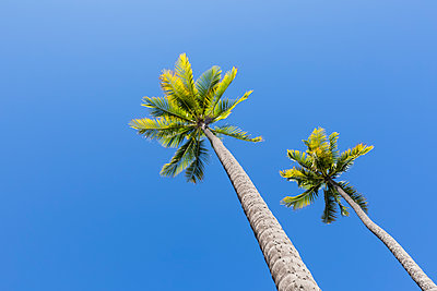 USA, Hawaii, Big Island, Pu'uhonua o Honaunau National Park - p300m2103348 von Fotofeeling