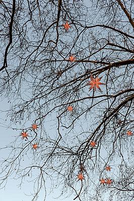 Weihnachtsdekoration - p949m951773 von Frauke Schumann