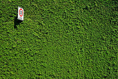 Alles im grünen Bereich - p1638m2232172 von Macingosh