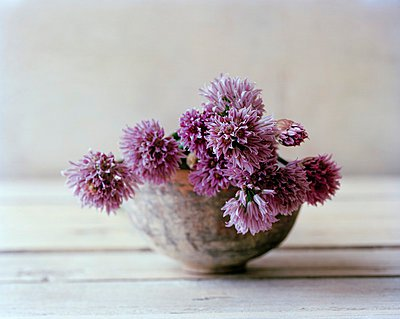 Blossoming Chives in a Vase - p1183m997489 by Hoffmann, Matthias