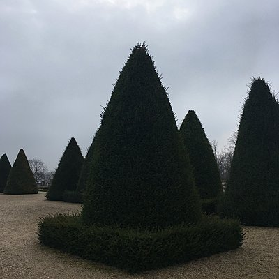 Buchsbaum im dreieckigen Formschnitt, Saint Cloud, Frankreich - p1401m2176529 von Jens Goldbeck