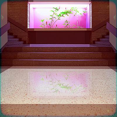 Treppe - p230m889872 von Peter Franck