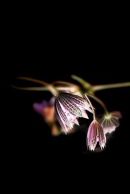 Trockene Blüten - p4500120 von Hanka Steidle
